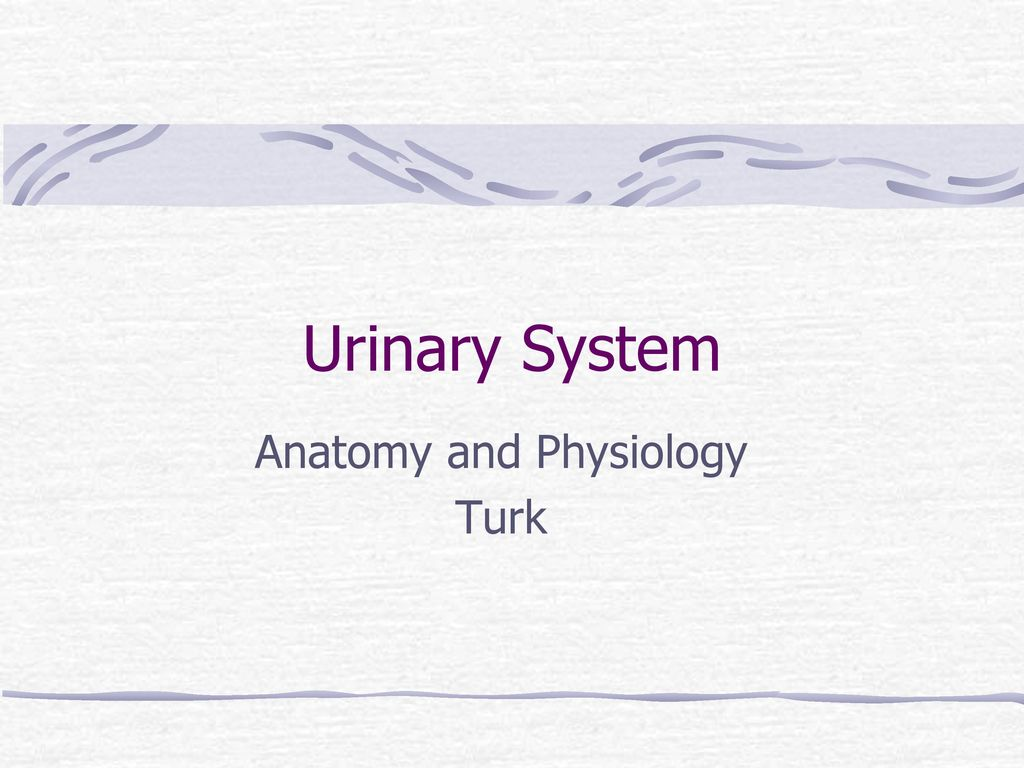 Anatomy and Physiology Turk - ppt download