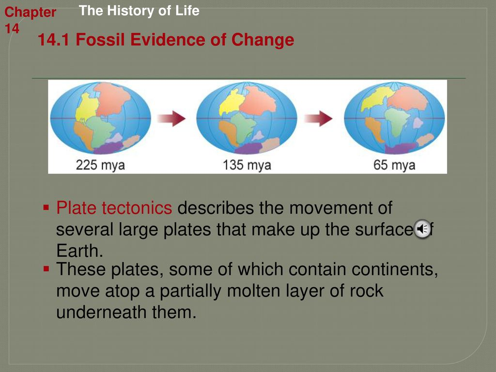 Chapter 14 The History of Life - ppt download