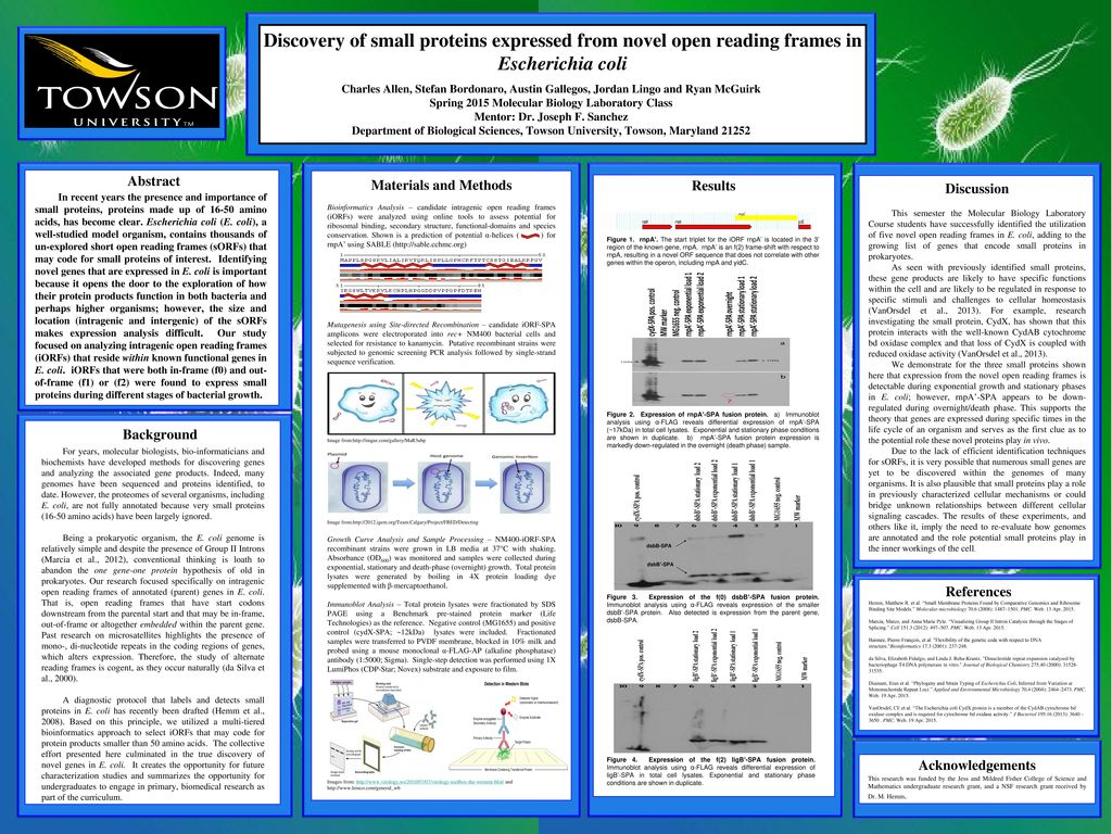 Discovery of small proteins expressed from novel open reading frames ...