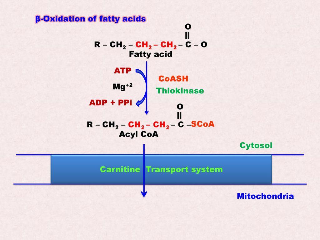 karrierenetzwe hg oxidation technology - HD1024×768