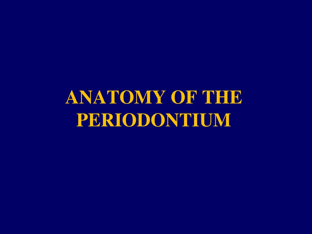 Anatomy Of The Periodontium Ppt Download