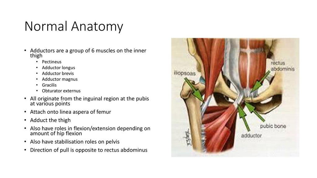 Adductor Related Groin Pain Ppt Download