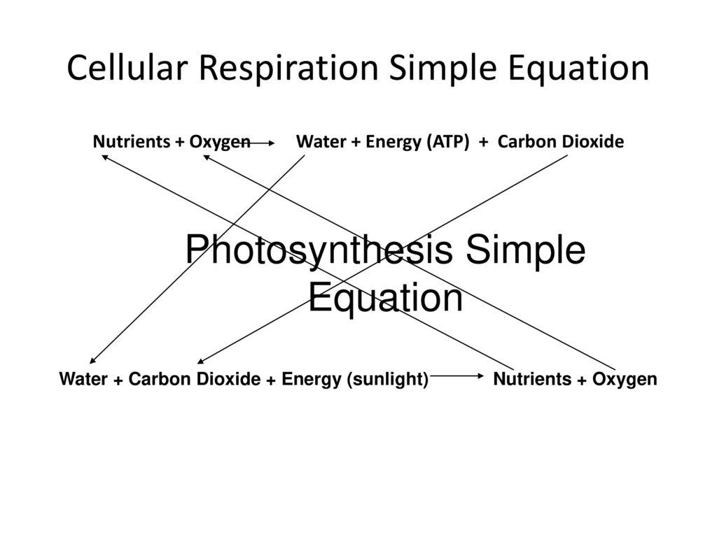 Cellular respiration ppt download cellular respiration simple equation ccuart Images