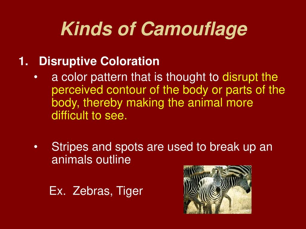 Animal Adaptations. - ppt download