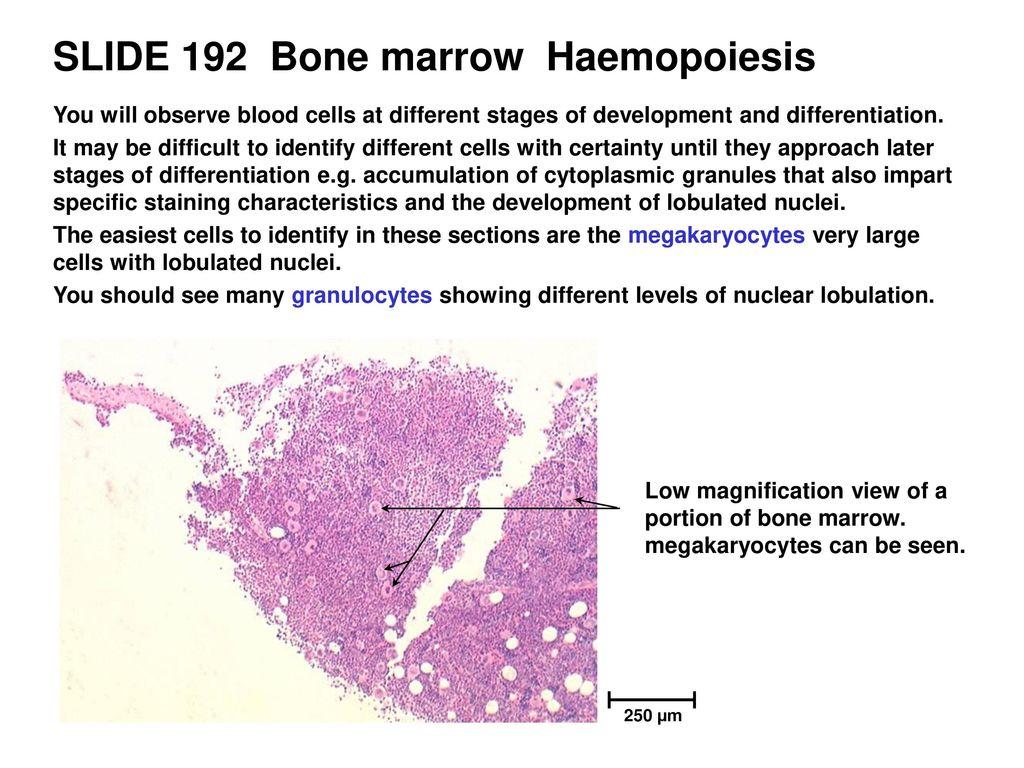 BLOOD & HAEMOPOIESIS This resource is licensed under the