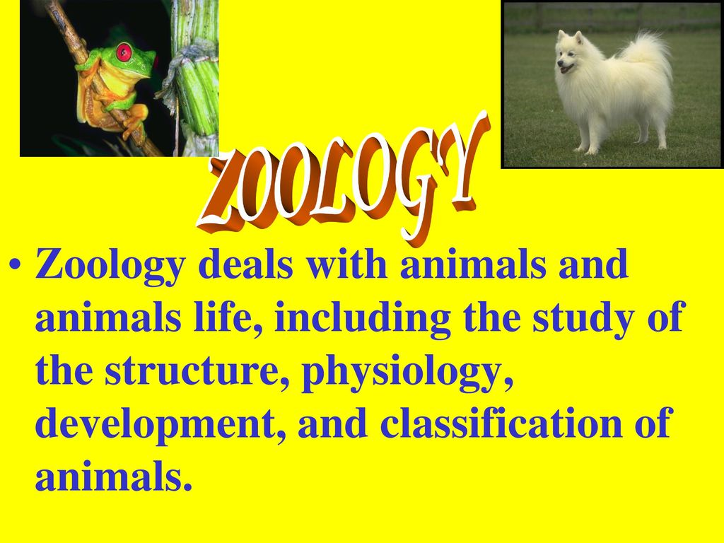 biology that deals with animals