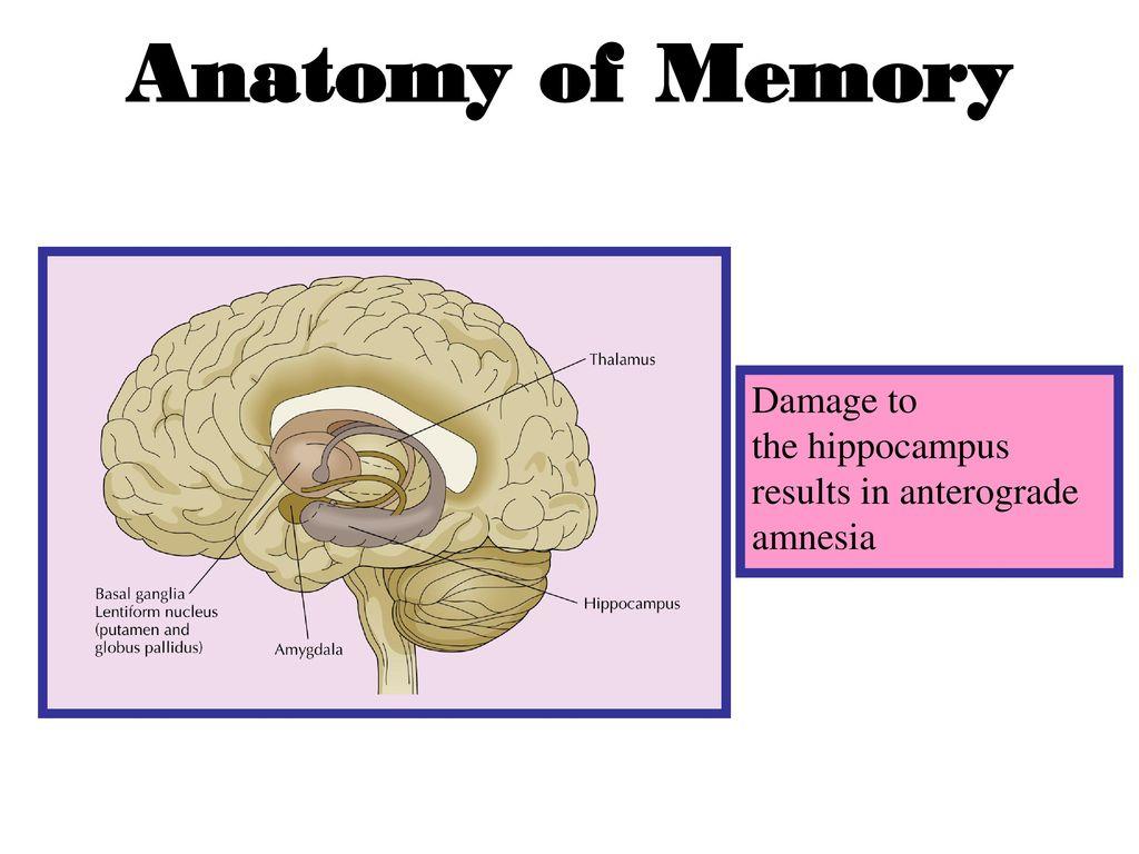 Memory Deficiency & Memory - ppt download