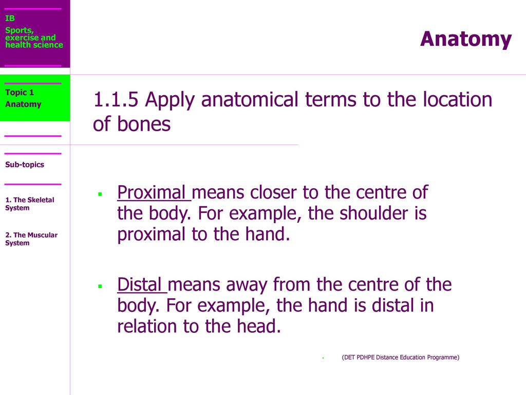 IB Sports, exercise and health science Anatomy Topic 1 Anatomy - ppt ...