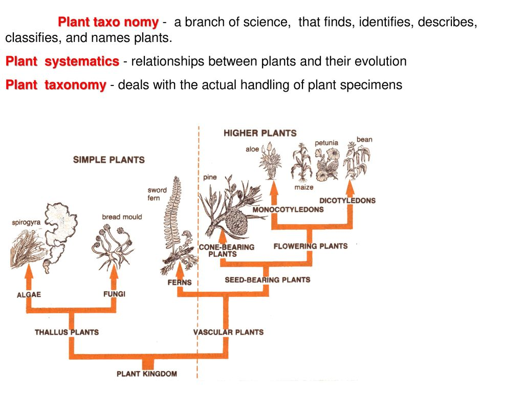 Plant taxonomy  - ppt download