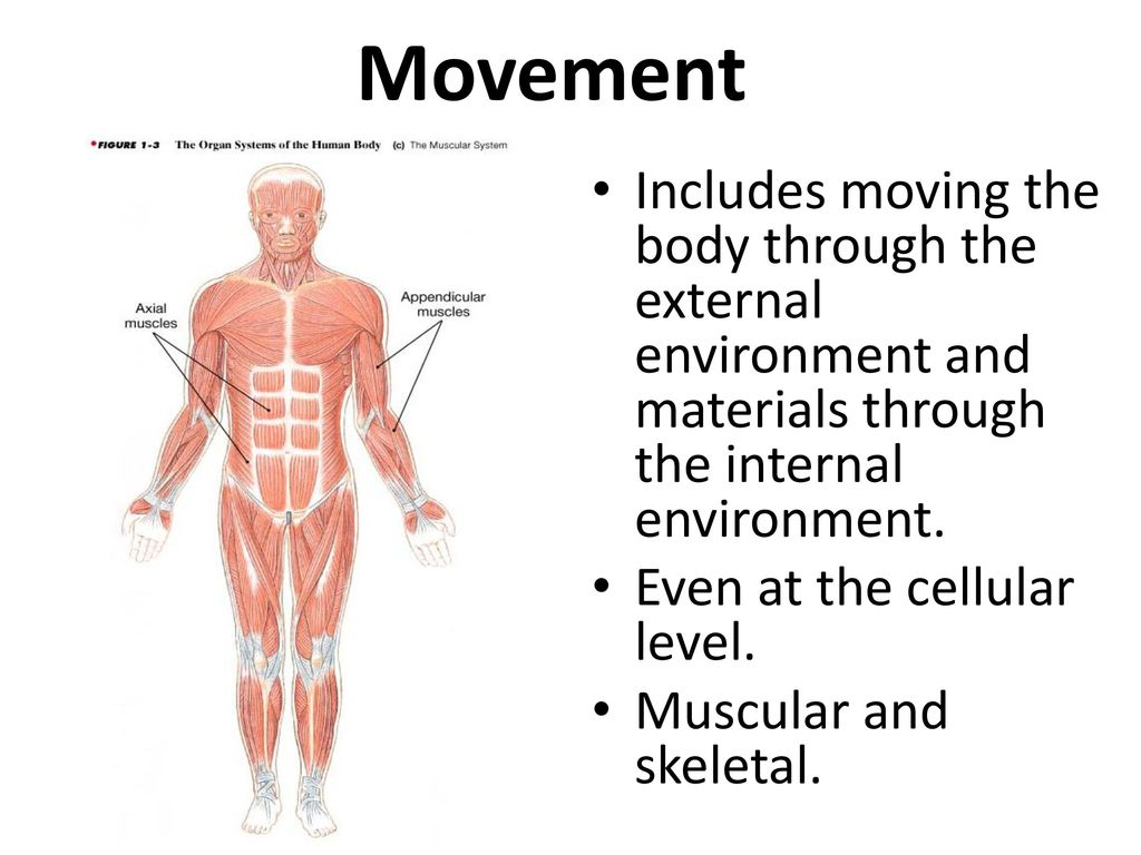 The internal environment of the human body 100