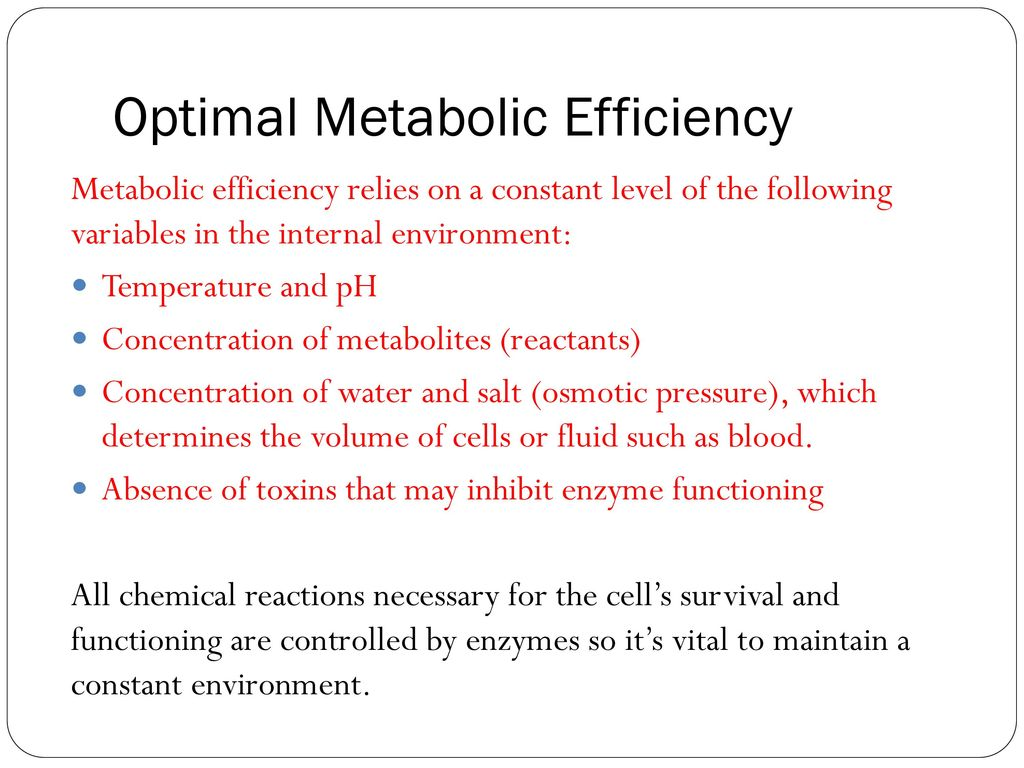 why is water vital to maintaining a constant internal environment