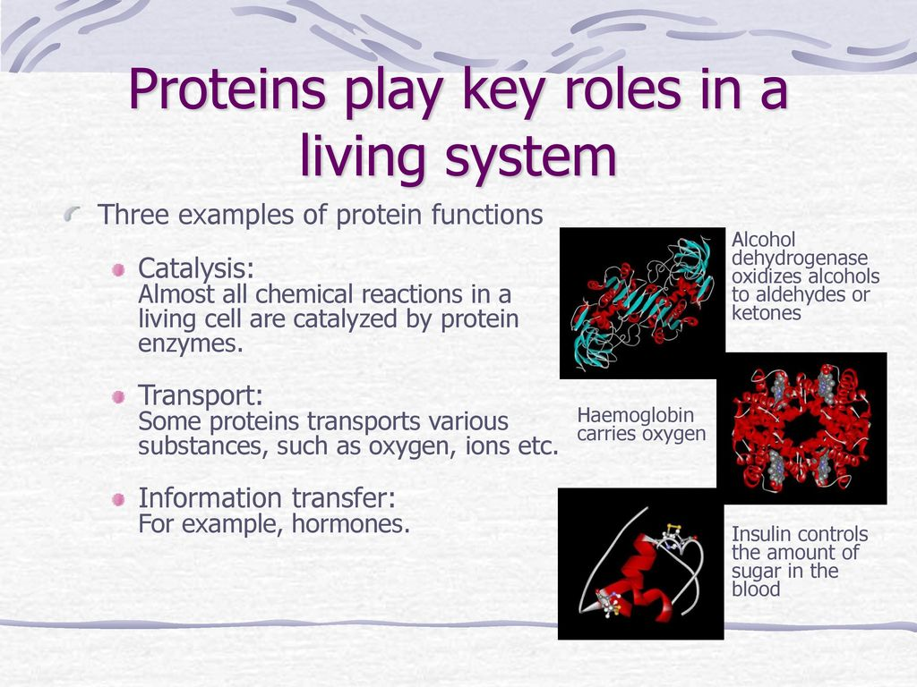 proteins play countless roles - HD1024×768