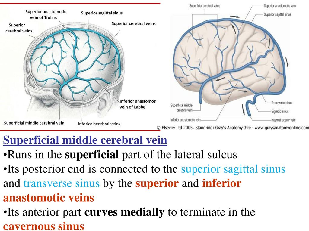 Blood supply of the nervous system - ppt download