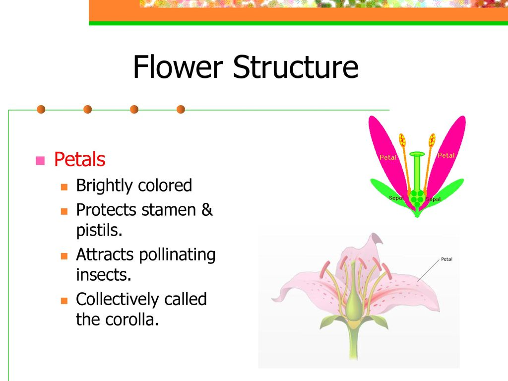 Plant anatomy physiology ppt download 15 flower structure izmirmasajfo
