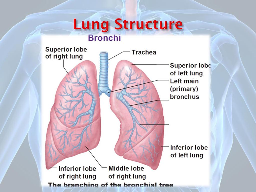 Handling And Evaluation Of Lung Biopsies Ppt Download