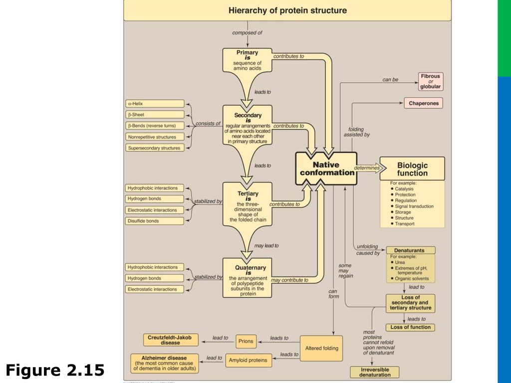 Proteins Concept Map.Unit I Protein Structure And Function Ppt Download