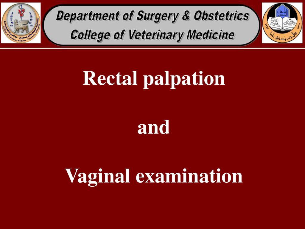 1 Rectal palpation and Vaginal examination