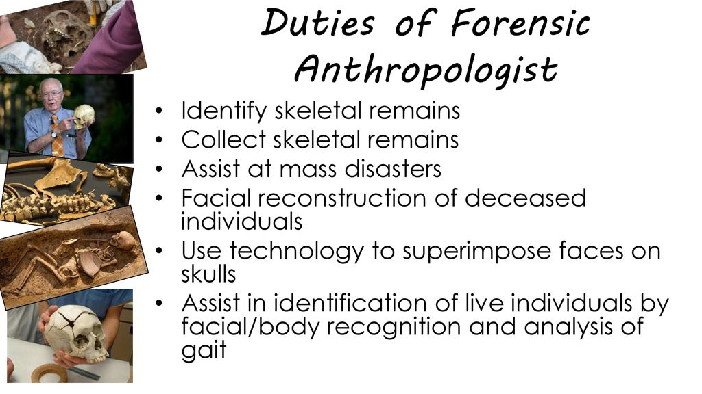Forensic Anthropology Ppt Download