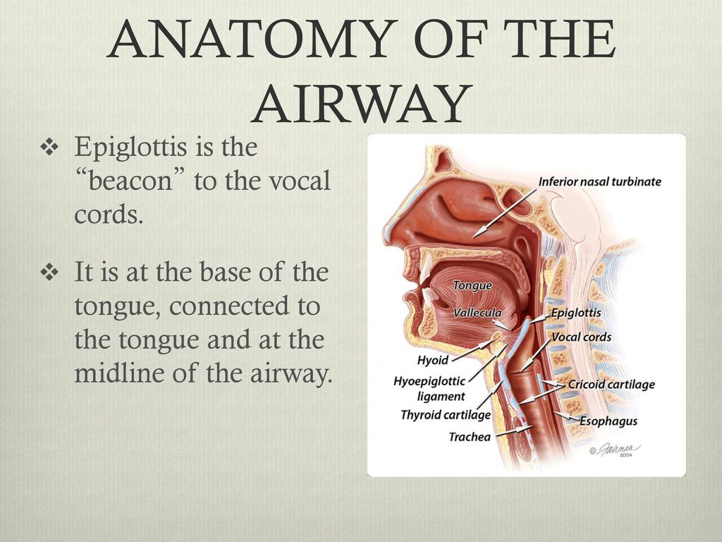 AIRWAY MANAGEMENT DAN MUSE, MD. - ppt download