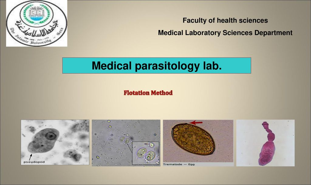 Medical parasitology lab  - ppt download