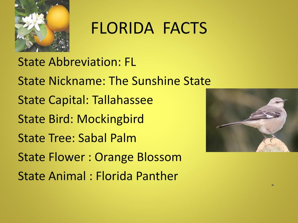 State Bird Flower And Tree Of Florida - Flowers Healthy