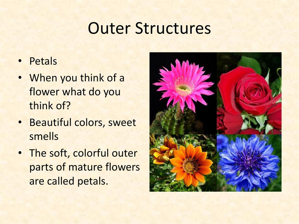 Sexual Reproduction In Flowering Plants Ppt Download