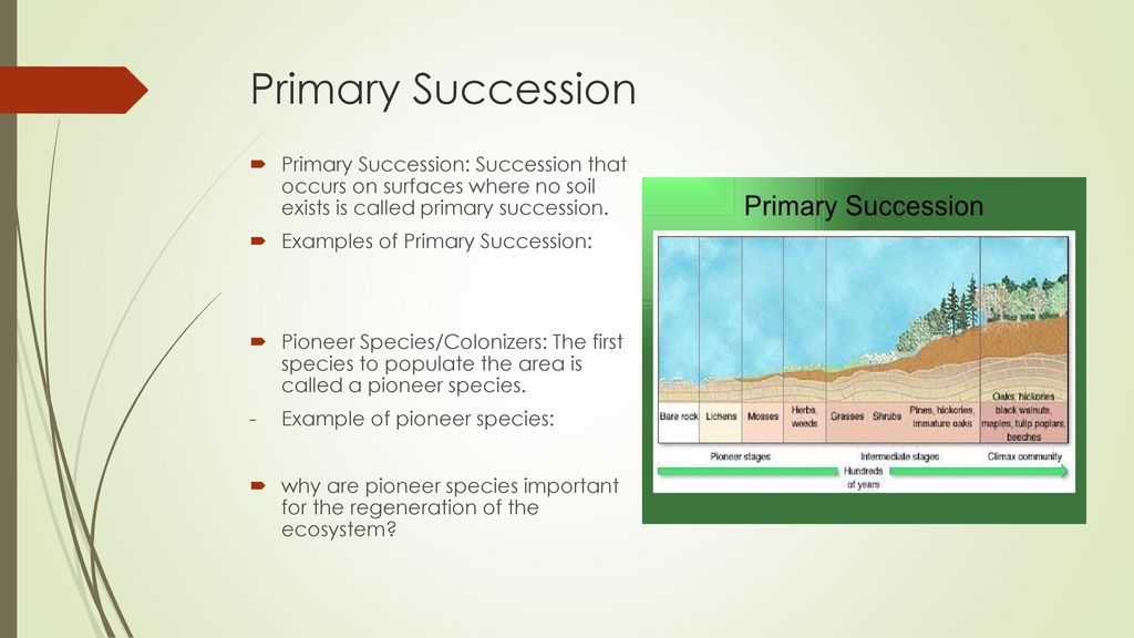 Ecological Succession And Marine Ecosystems Ppt Download