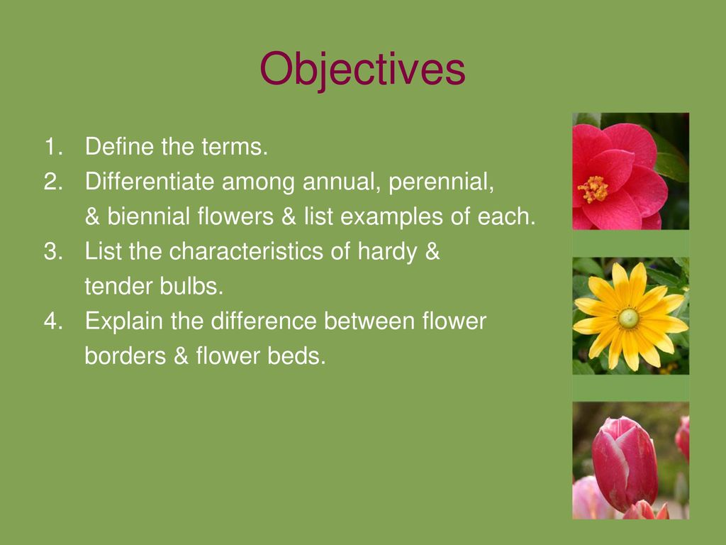 Flowers in the landscape ppt download differentiate among annual perennial izmirmasajfo