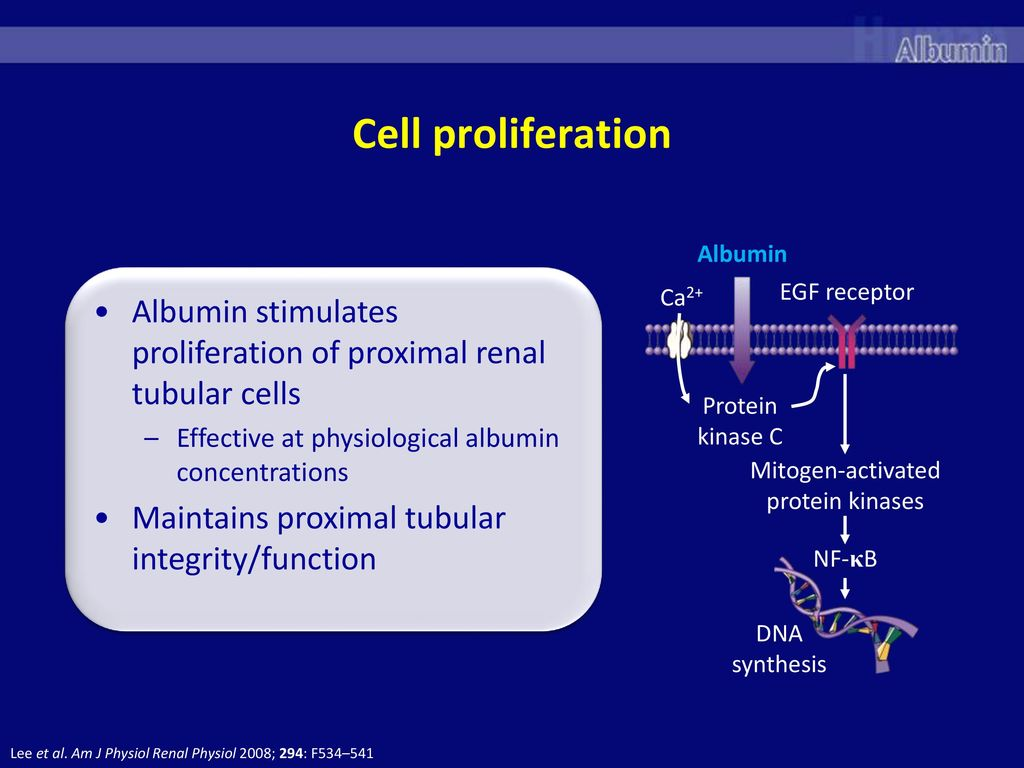 A Protein With Multitude Of Functions Ppt Download Pro Albumin Cell Proliferation Stimulates Proximal Renal Tubular Cells Effective At Physiological