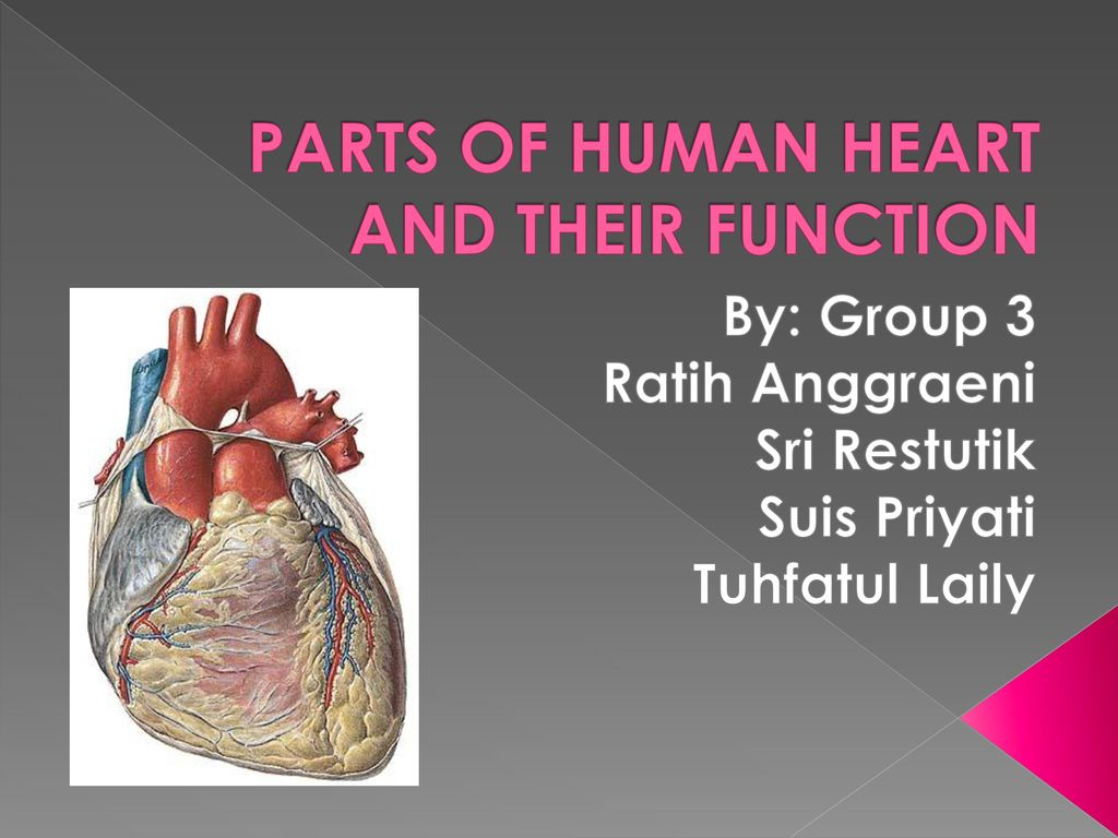 Parts Of Human Heart And Their Function Ppt Download