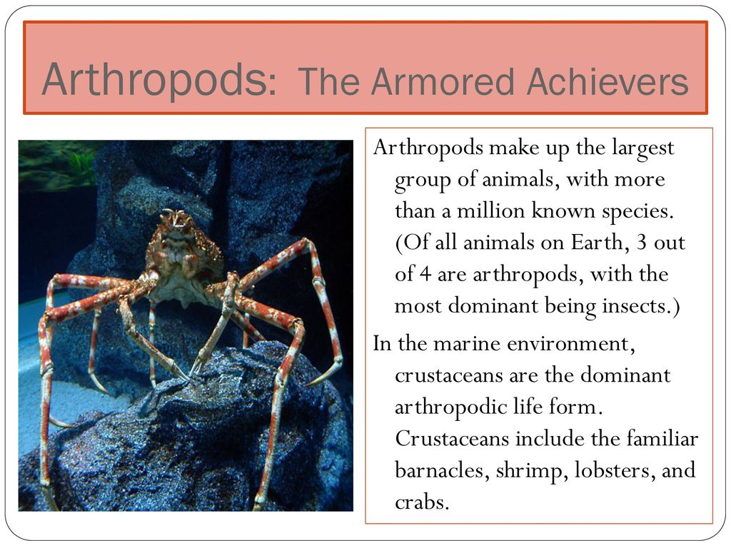 43 Arthropods The Armored Achievers