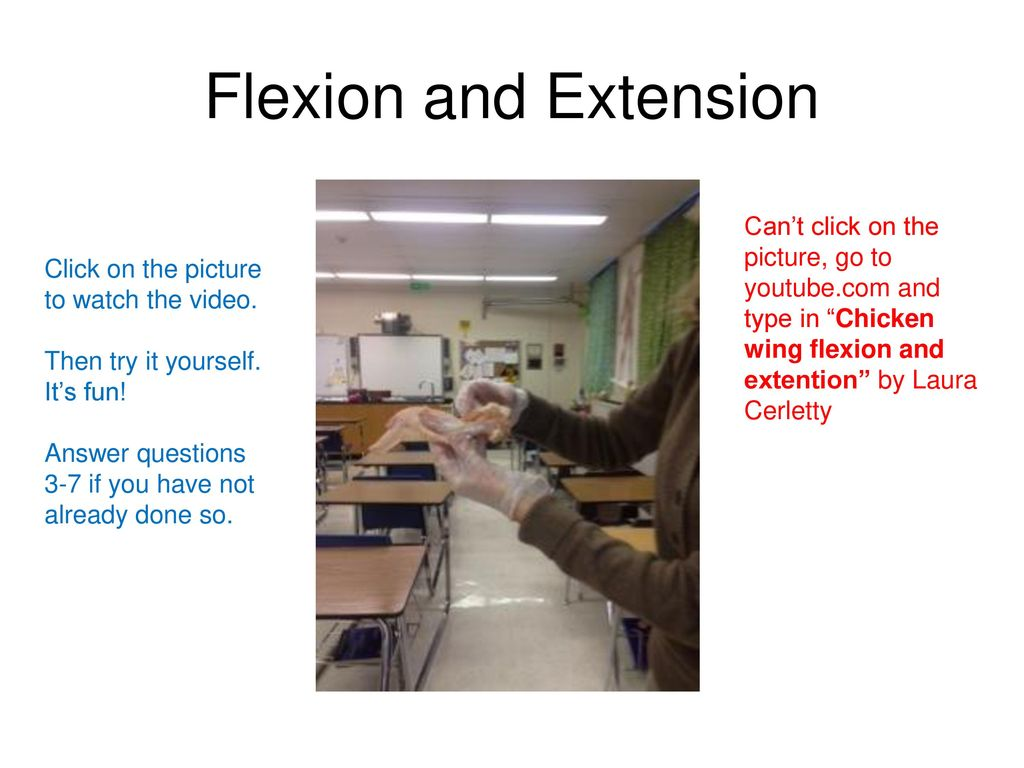 Chicken Wing Dissection Ppt Download Anatomy Diagram Flexion And Extension Cant Click On The Picture Go To Youtubecom