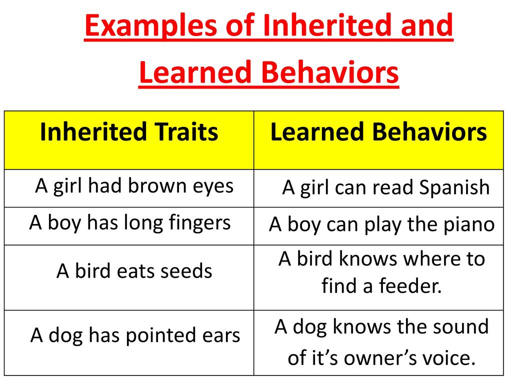 Inherited Traits And Learned Behaviors Ppt Download