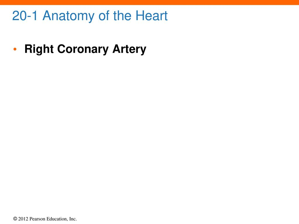20 The Heart. - ppt download