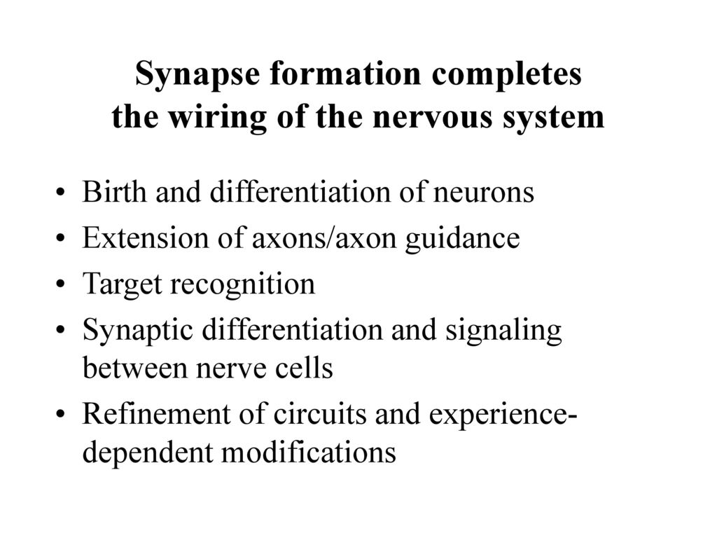 Synapse Formation Completes The Wiring Of Nervous System Ppt Templates Electrical Powerpoint Template