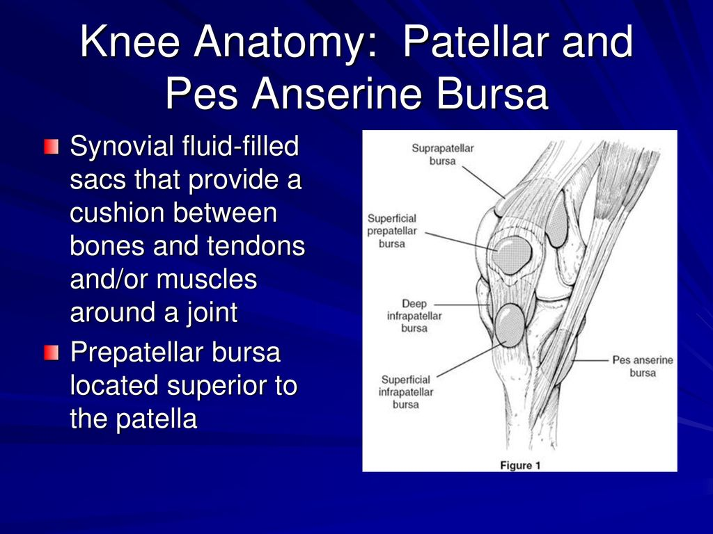 Evaluation Of Knee Injuries Ppt Download