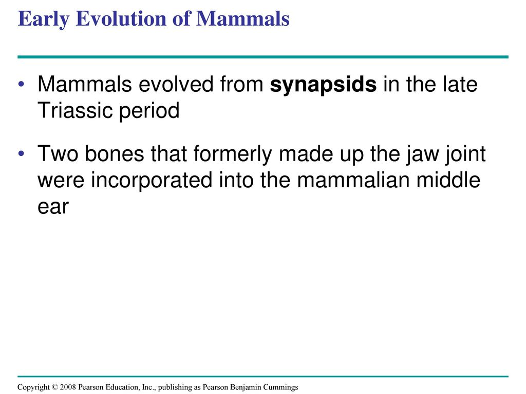 Chapter 34 Vertebrates Ppt Download Snake Bones Diagram Evolution Of The Mammalian Middle Ear Early Mammals
