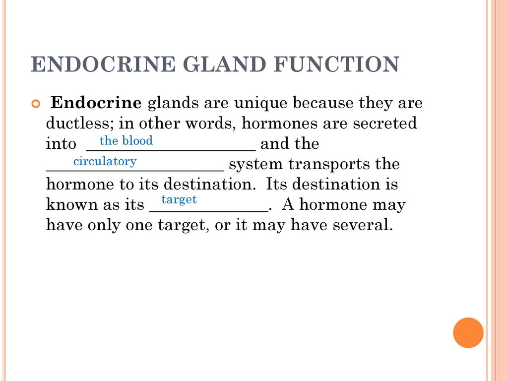 Famous Function Of Endocrine Gland Image Collection - Physiology Of ...