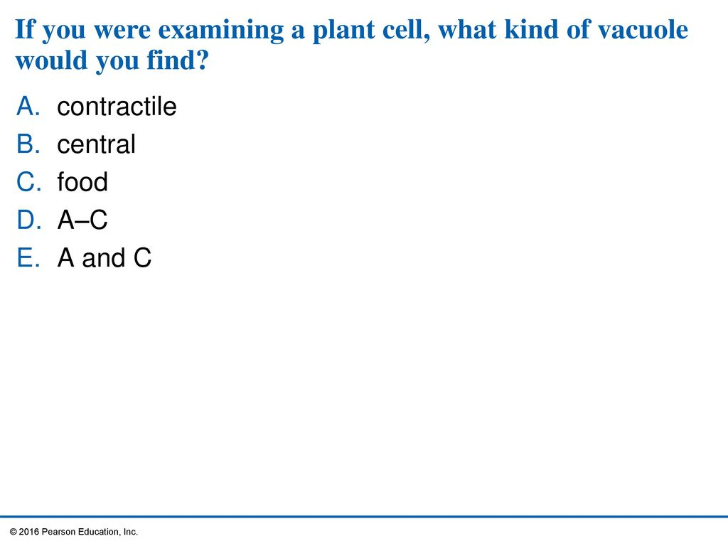 4 A Tour Of The Cell Ppt Download Prokaryoticcelljpg 42 If
