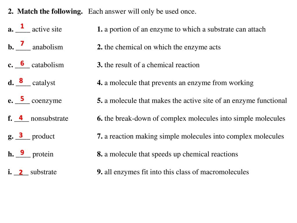 enzymes vocabulary plus worksheet 2 2 - Enzyme Worksheet