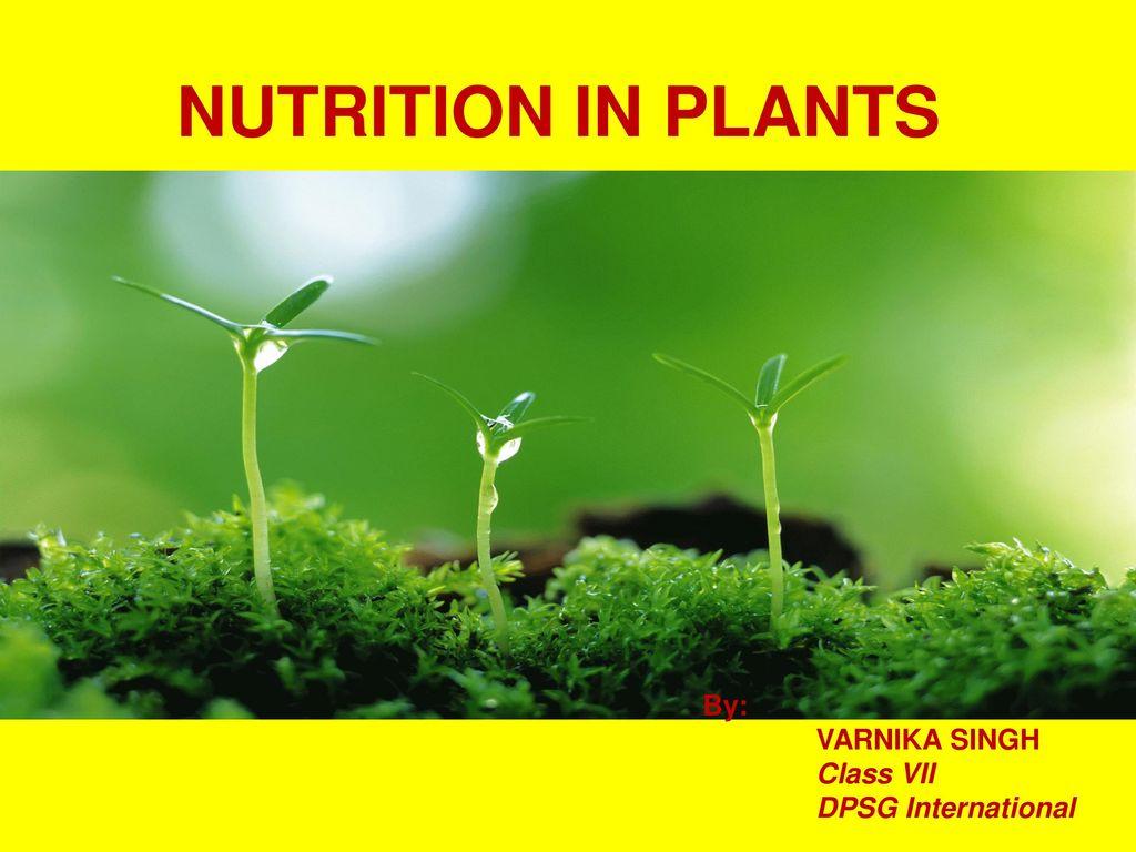 Nutrition In Plants By Varnika Singh Class Vii Dpsg International