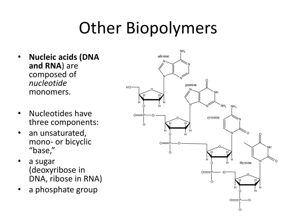 Monomers of nucleic acids are compound components 28