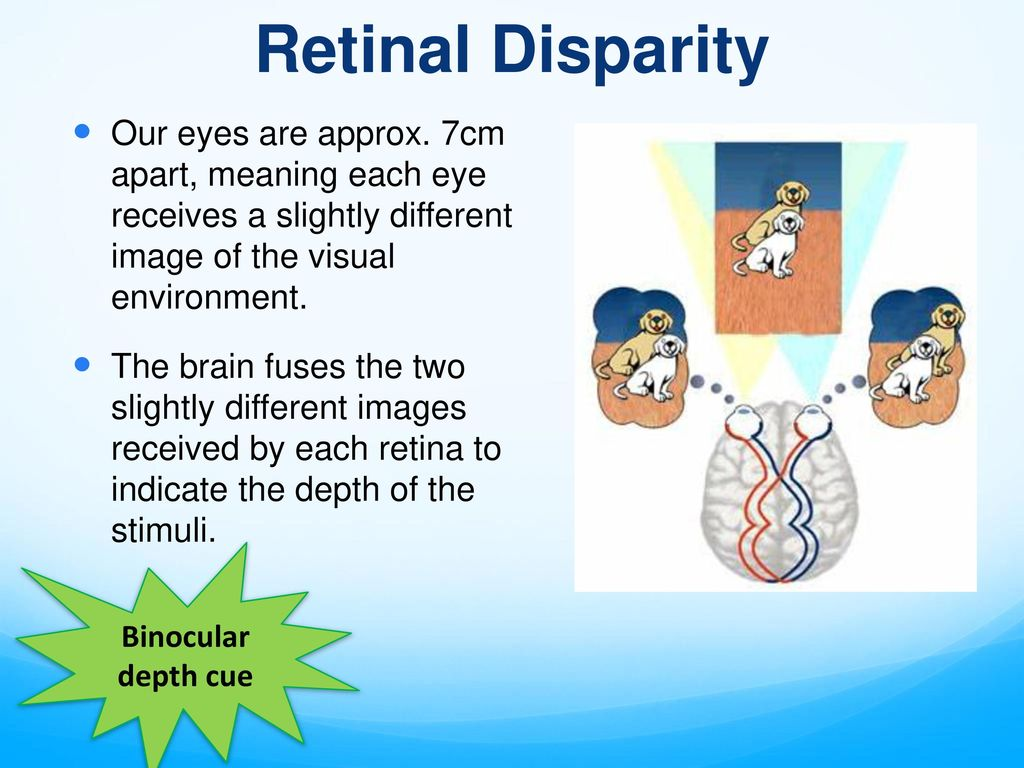visual perception chapter ppt download