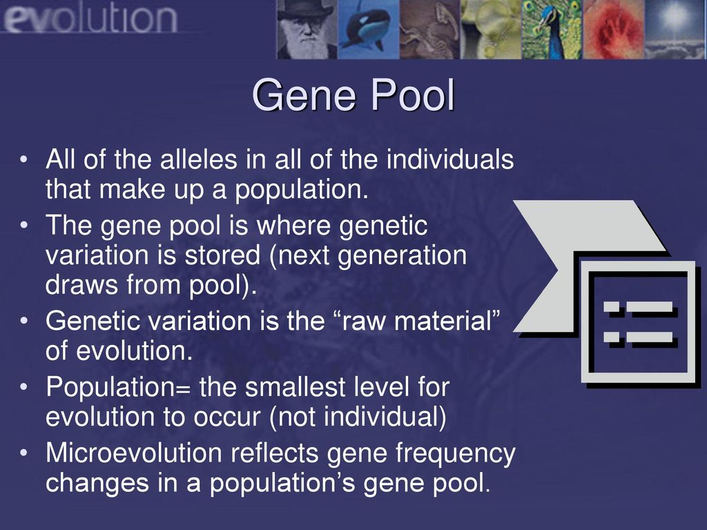 gene pool diversity - HD1024×768