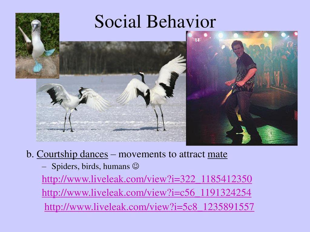 Animal Behavior  - ppt download