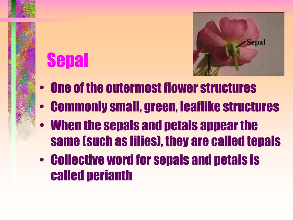 Nomenclature and Anatomy of Flowers - ppt download