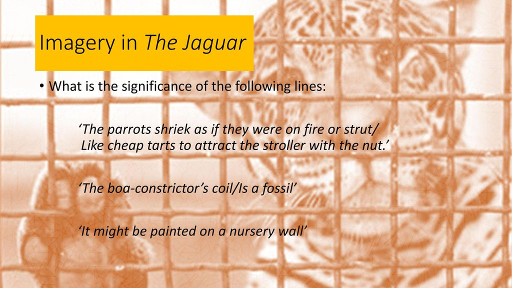 Imagery In The Jaguar What Is The Significance Of The Following Lines: