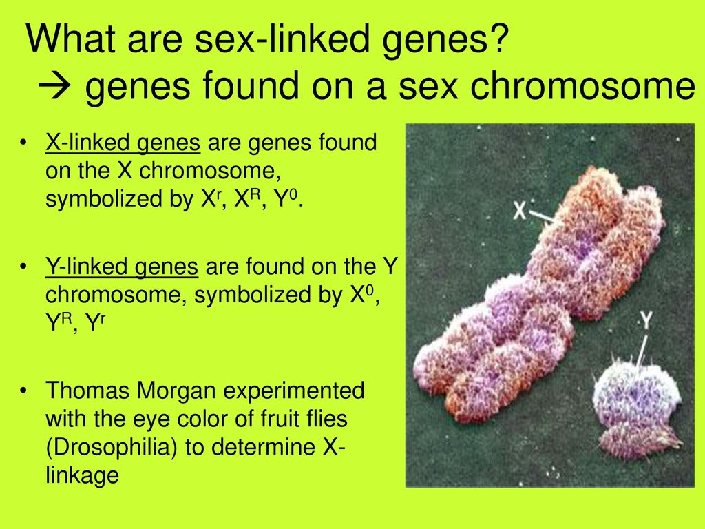 Human Genetics: Patterns of Inheritance for Human Traits - ppt download