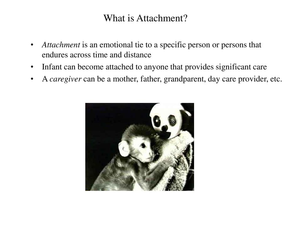 the emotional attachment of a human infant for its caregiver