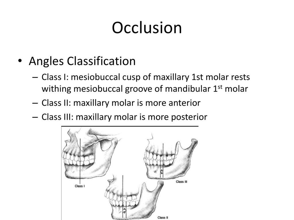 Fantastic Anatomy Of Molar Photos Anatomy And Physiology Tissue